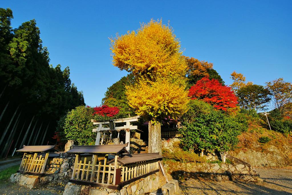京北 熊野神社の写真素材
