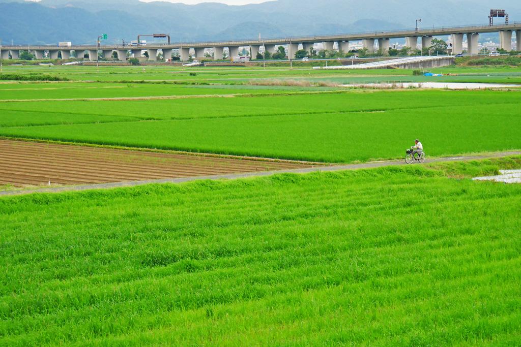 京滋バイパスとたんぼの写真素材