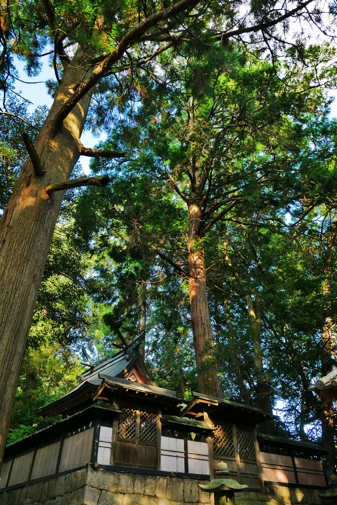 國津神社の写真素材