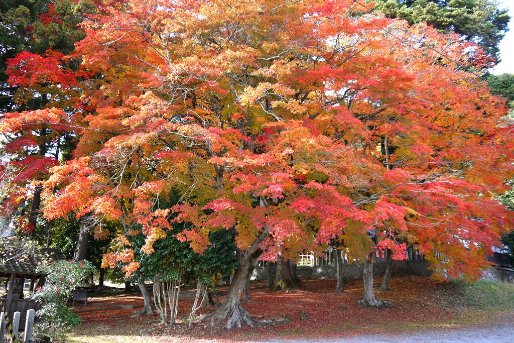 九手神社の紅葉の写真素材