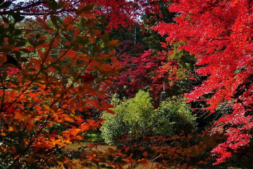 鍬山神社の紅葉の写真素材