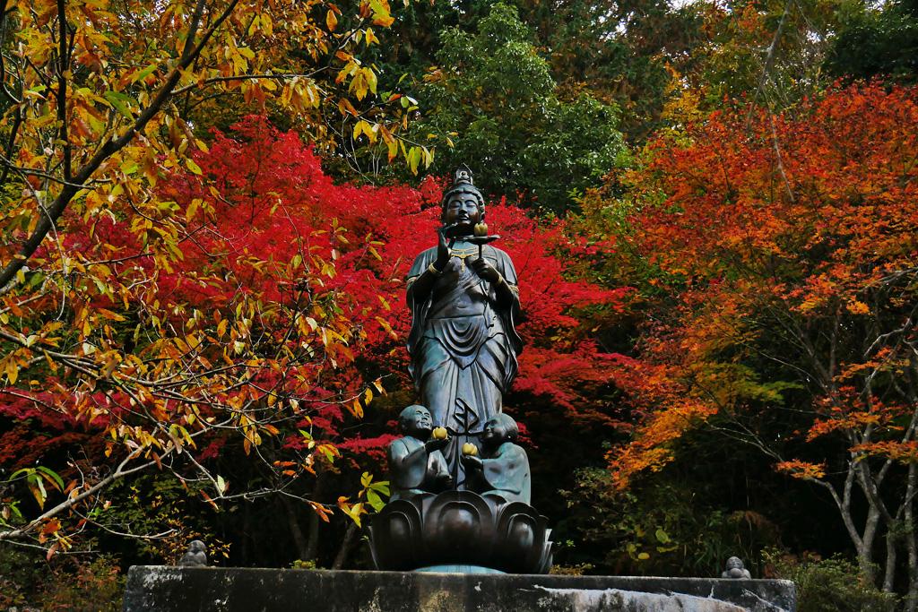 園部 教伝寺の紅葉の写真素材