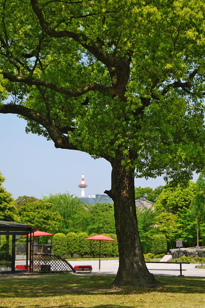 東寺から見た京都タワーの写真素材