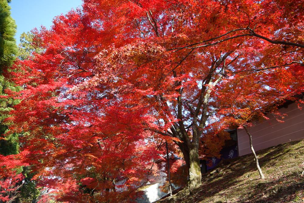 曼殊院の紅葉の写真素材