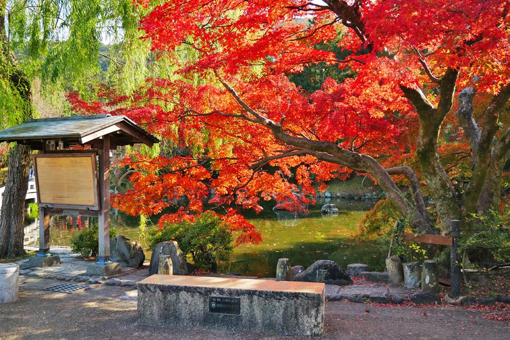 円山公園の写真素材