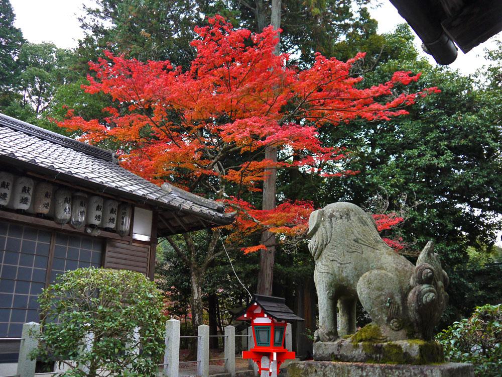 三宅八幡宮の紅葉の写真素材