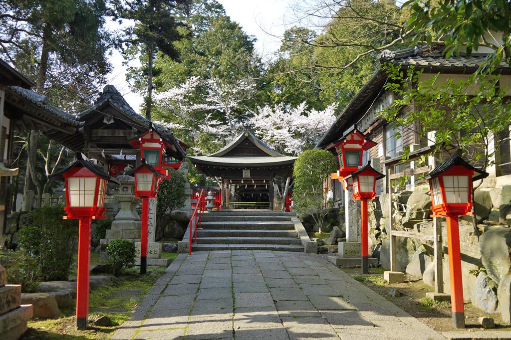 三宅八幡宮の桜の写真素材