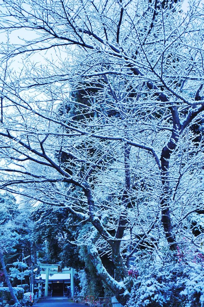 山科 諸羽神社の雪の写真素材