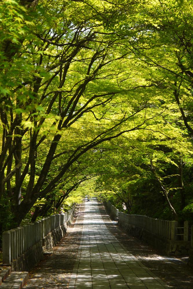 向日神社の新緑の参道の写真素材