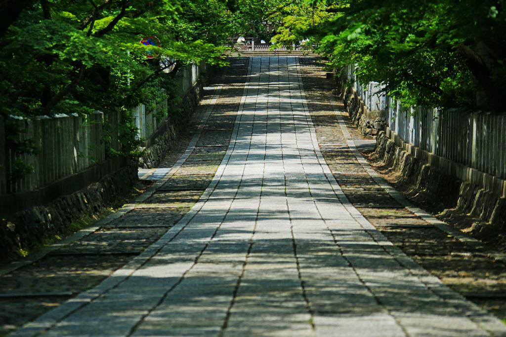 向日神社の参道の写真素材