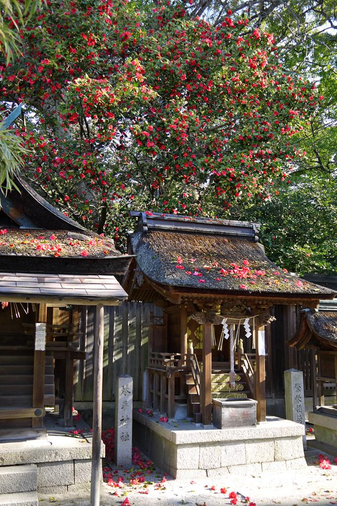 京都御苑の宗像神社の写真素材