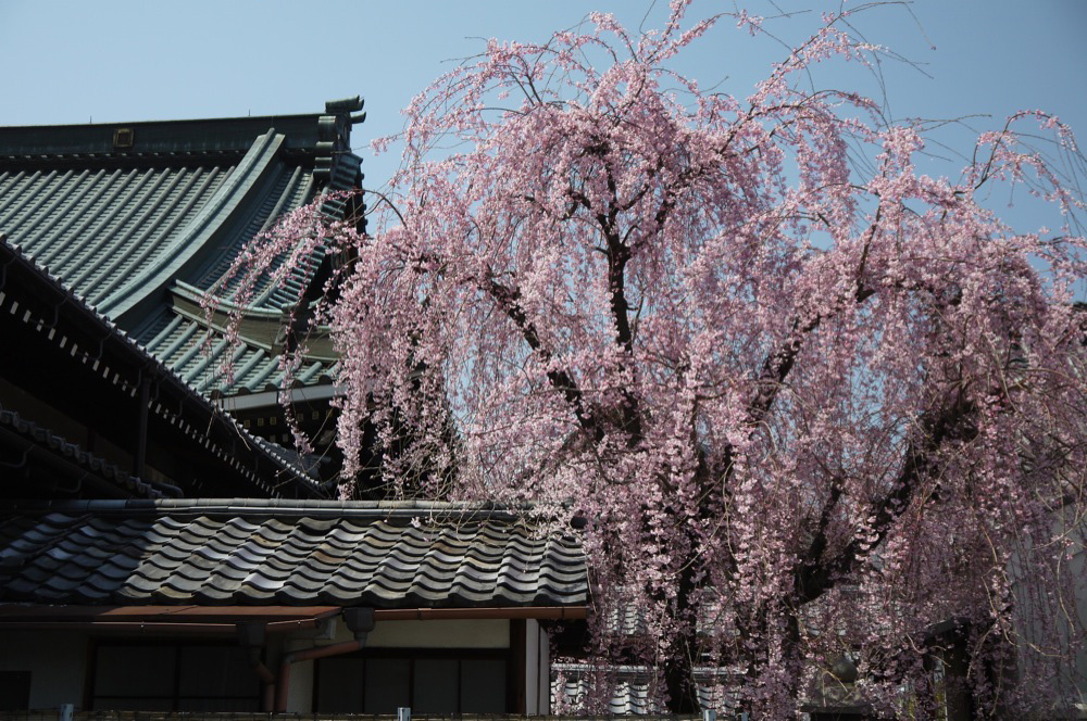 妙伝寺の写真素材