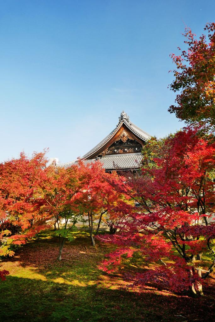 妙覚寺の紅葉の写真