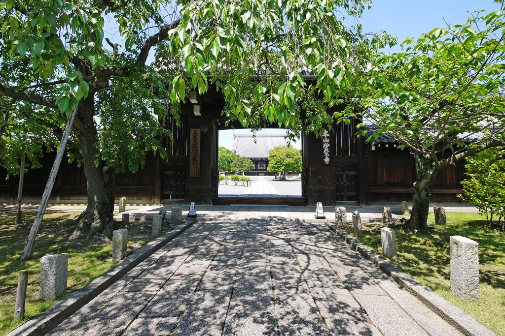 妙覚寺の八重桜の写真