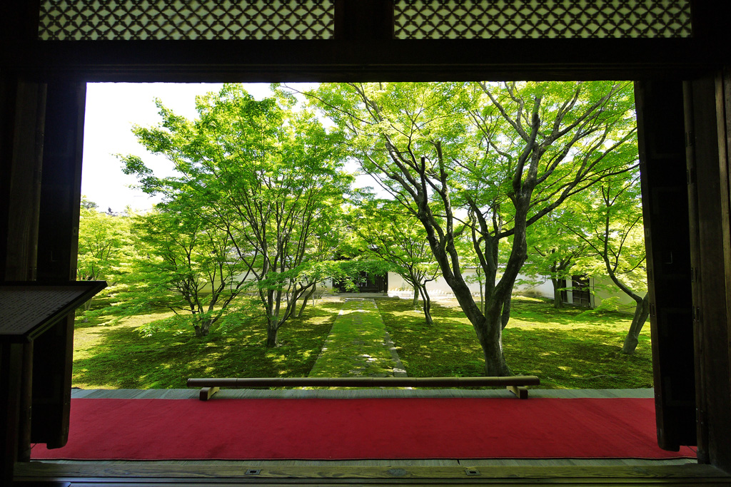 妙覚寺の法婆園の写真