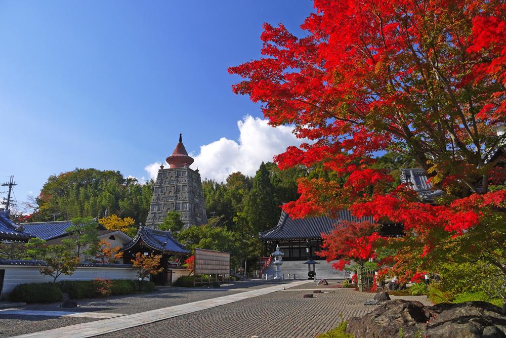 妙満寺のツツジ