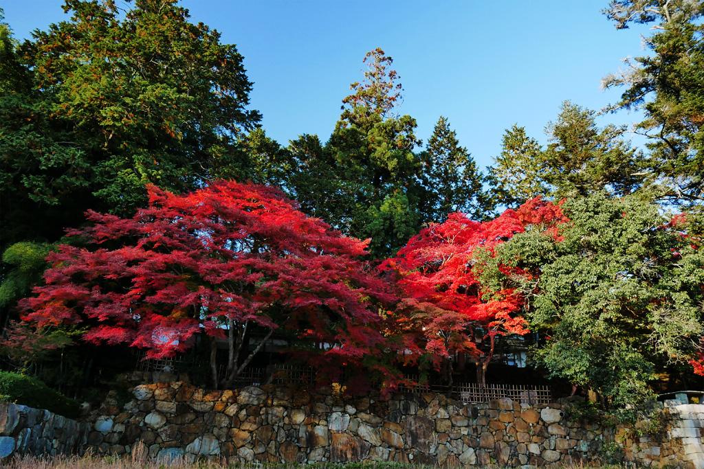 苗秀寺の紅葉の写真素材