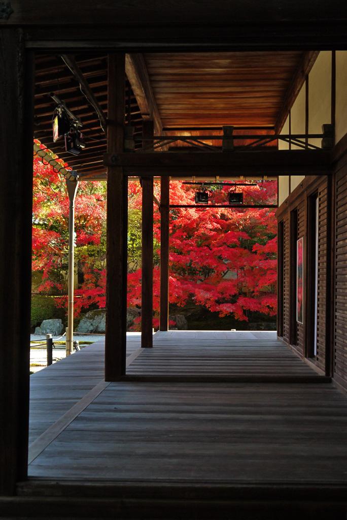 南禅寺天授庵の紅葉の写真素材