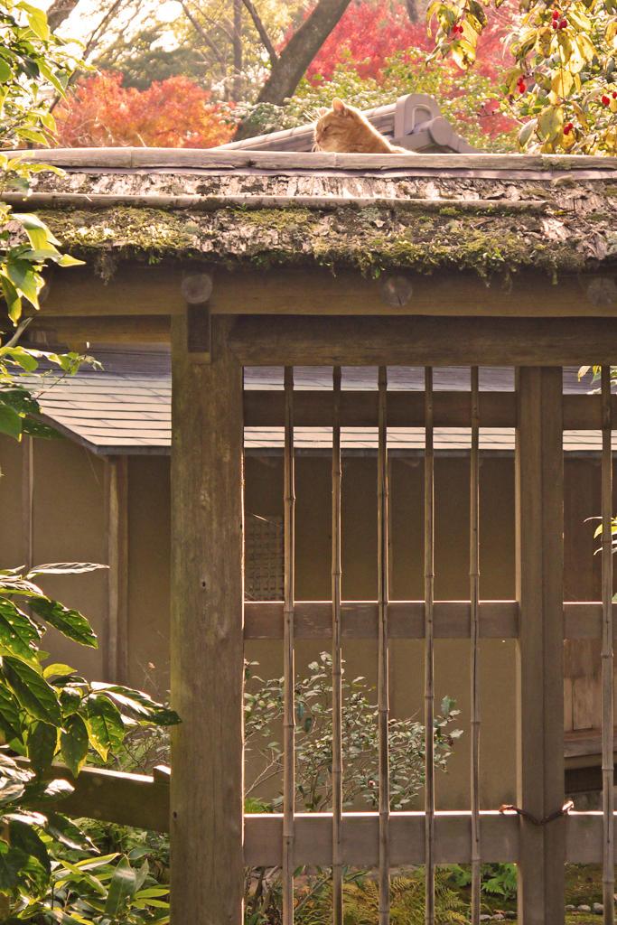 京都の猫の写真素材