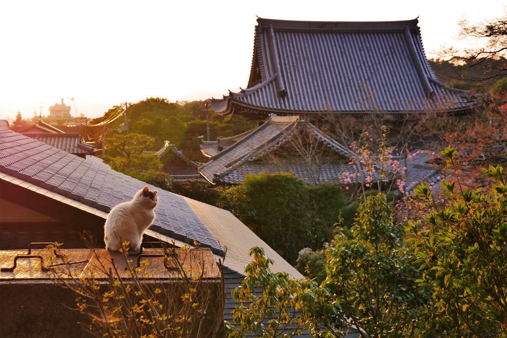 哲学の道のネコ 光雲寺の写真素材