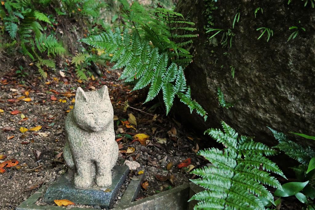 猫 笠置山の笠やんの写真素材