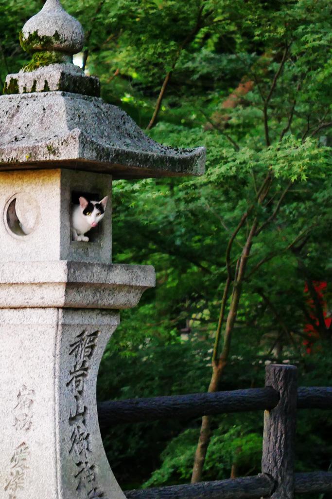京都の伏見稲荷大社の灯籠ネコの写真素材