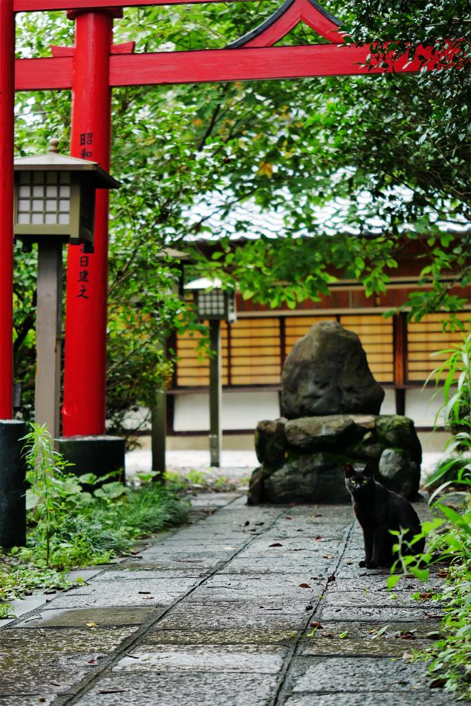 千本釈迦堂のネコの写真素材