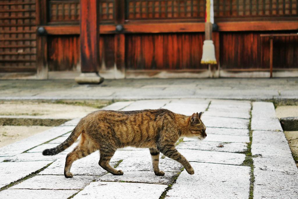 菅大臣神社のネコの写真素材