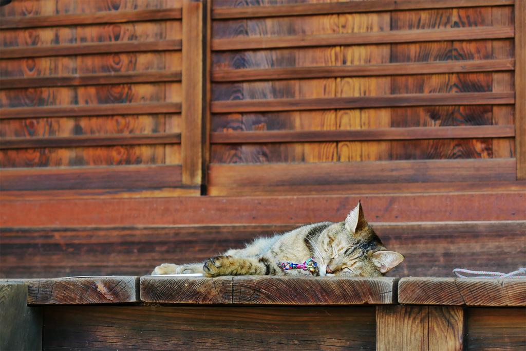 梅宮大社のネコの写真素材