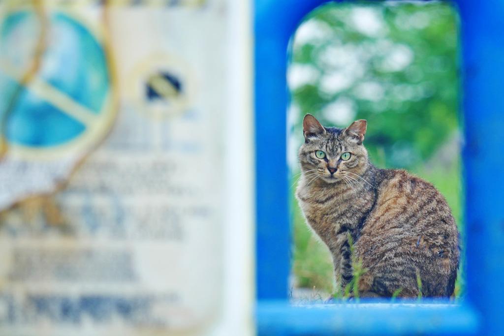 京都の将軍塚のネコの写真素材