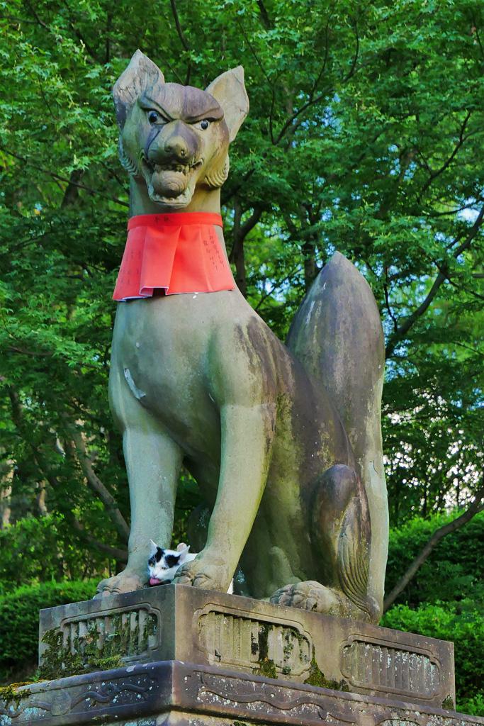 伏見稲荷の狐と猫の写真素材