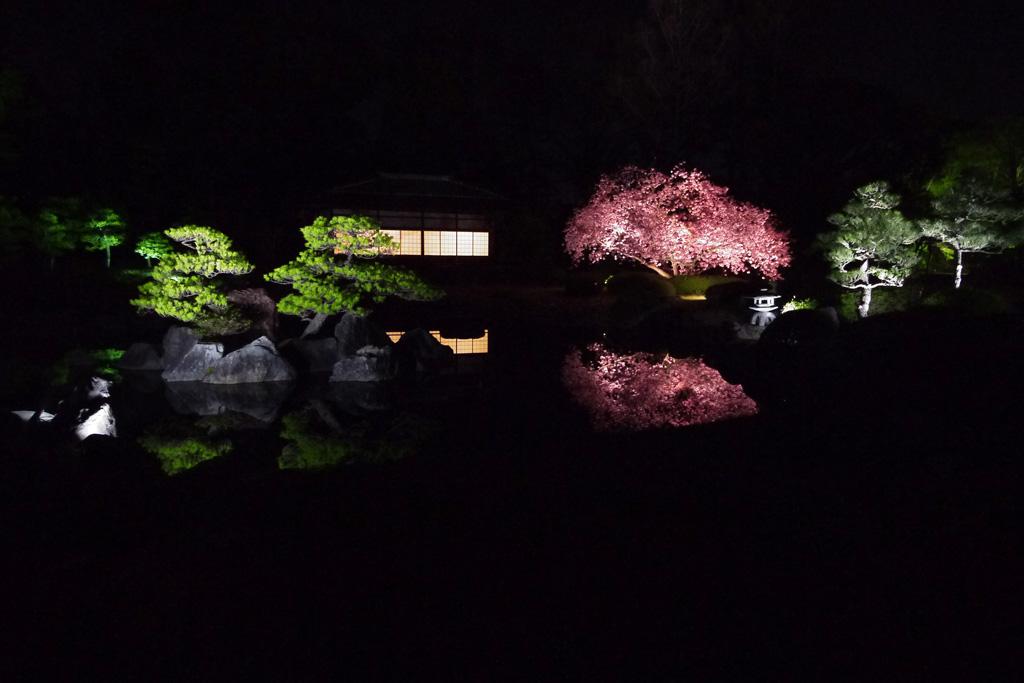 二条城の桜の写真素材