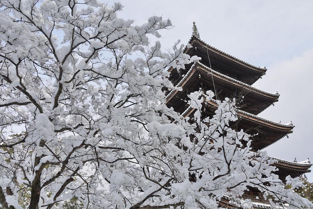 仁和寺の雪景色の写真素材