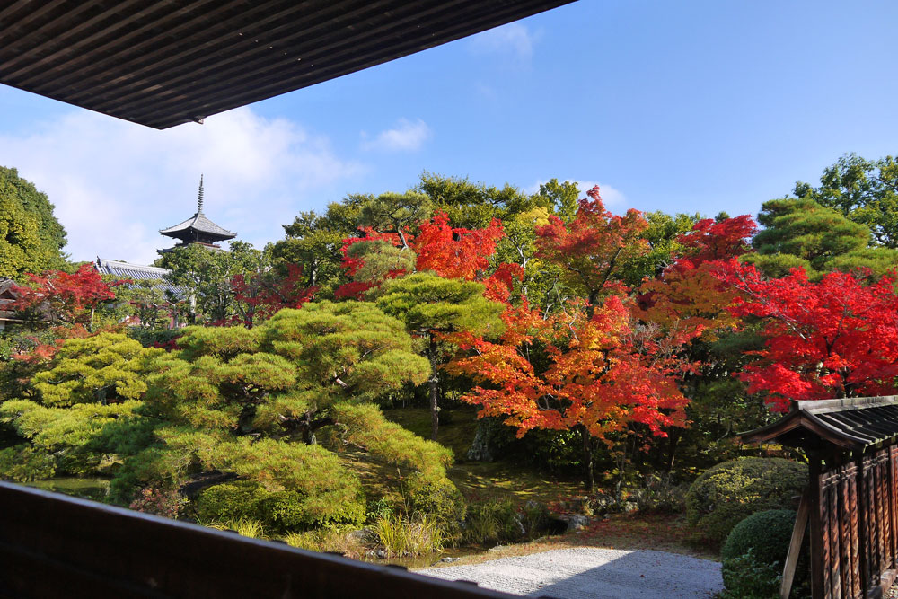 仁和寺の紅葉の写真素材