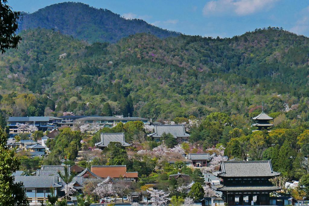 双ヶ丘から見た仁和寺境内の写真素材