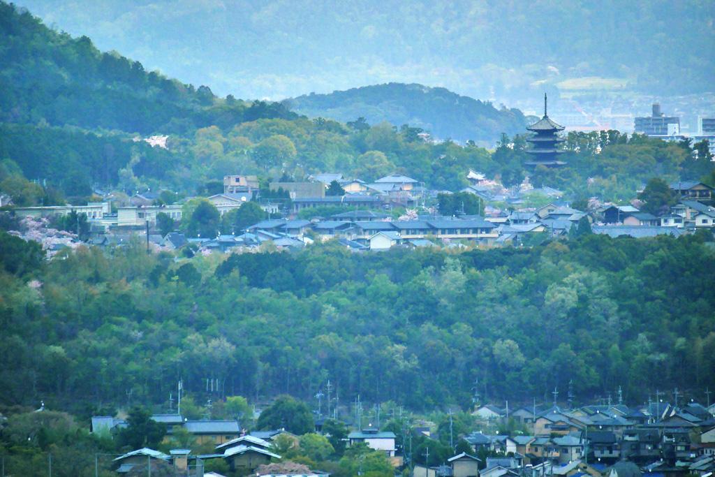 仁和寺の五重塔の写真素材