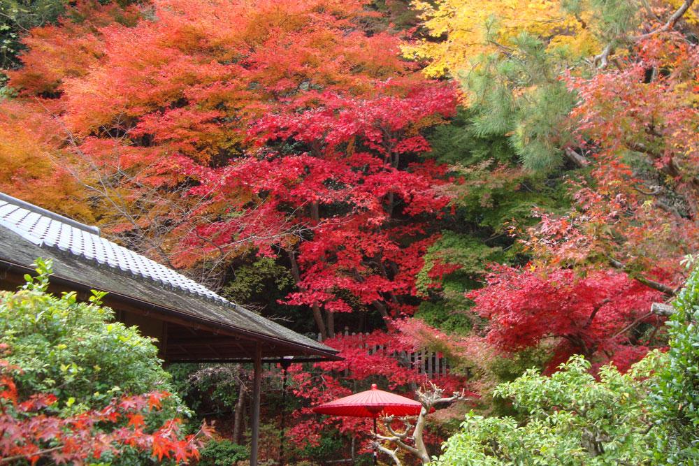 京都 二尊院の紅葉の写真素材
