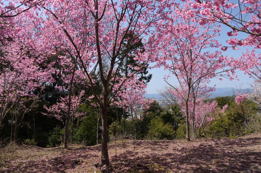 若王子神社の写真素材