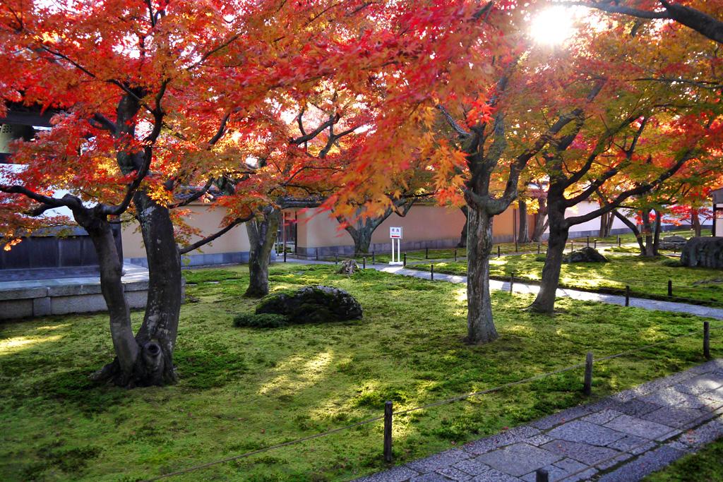 大徳寺 黄梅院の写真素材