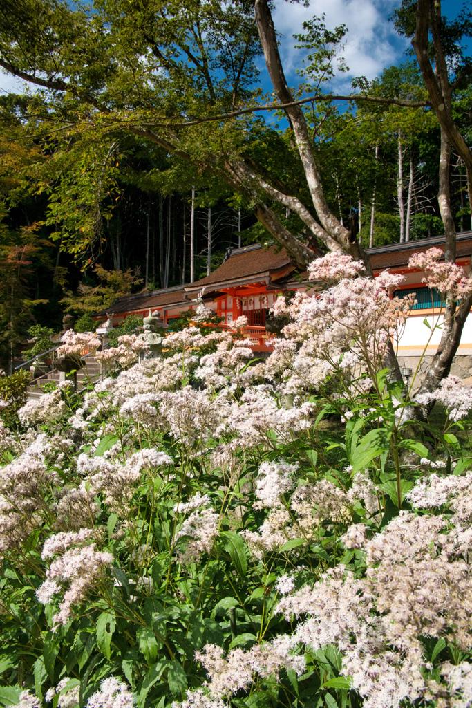 大原野神社の写真素材