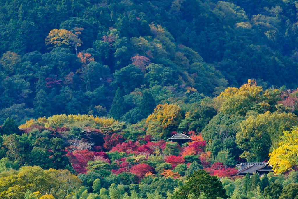 大河内山荘の紅葉の写真素材