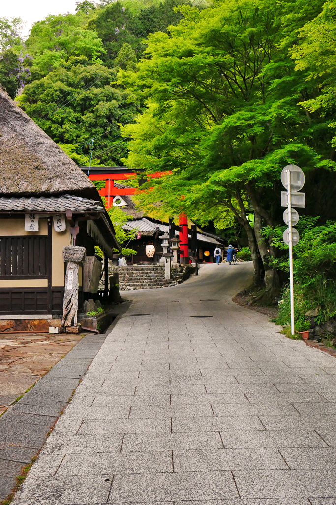 京都 奥嵯峨の写真素材