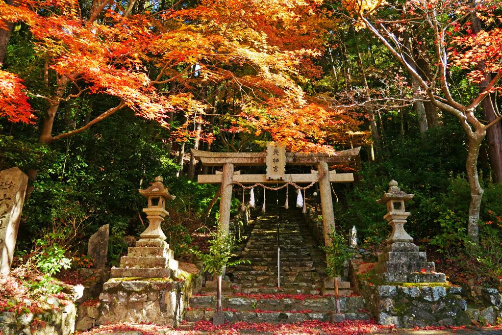 大道神社の紅葉写真素材