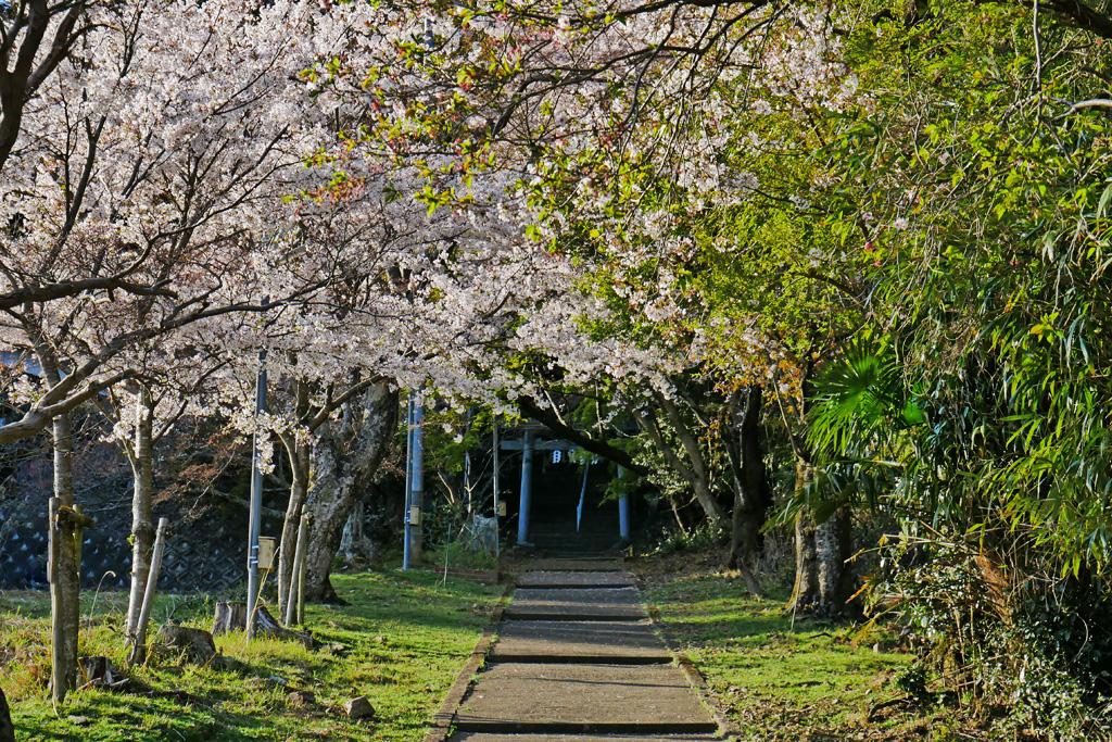 宇治田原町の大宮神社の写真素材
