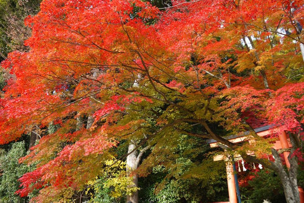 大田神社の紅葉