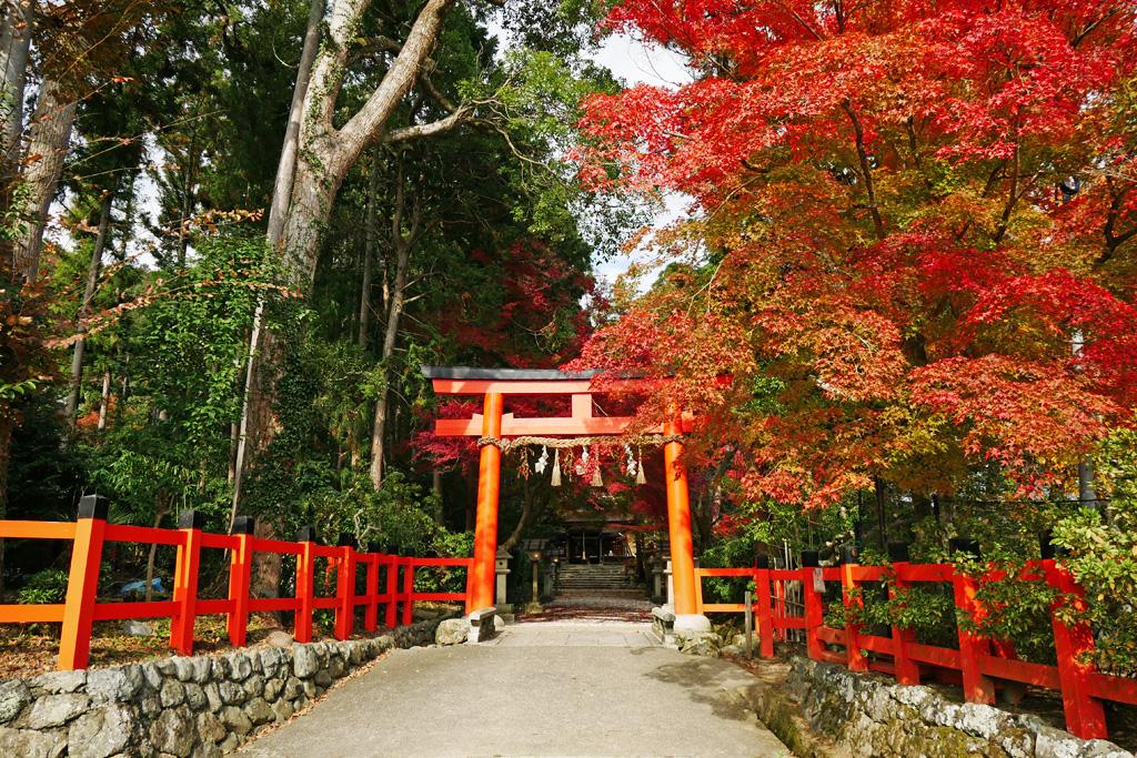 大田神社の紅葉の写真素材
