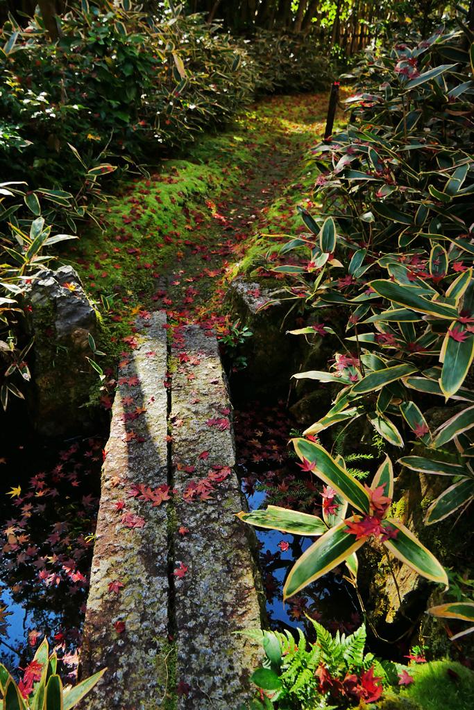 泉涌寺来迎院の紅葉の写真素材