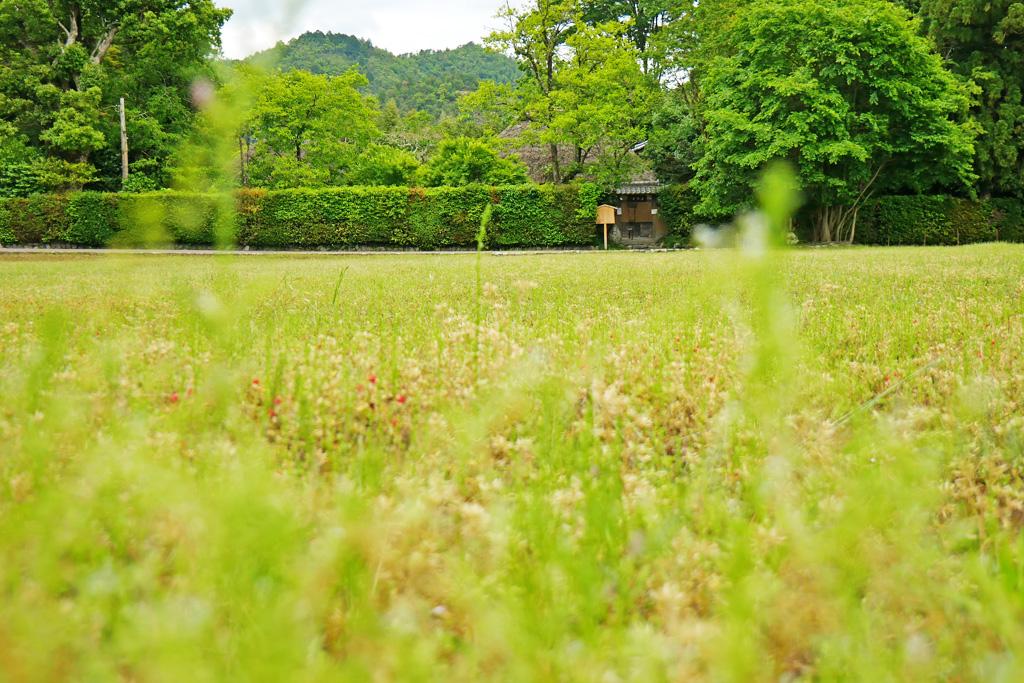 落柿舎の写真素材