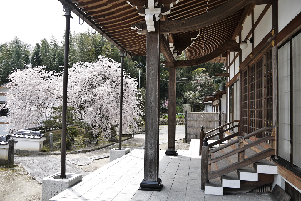 嶺松寺の写真素材