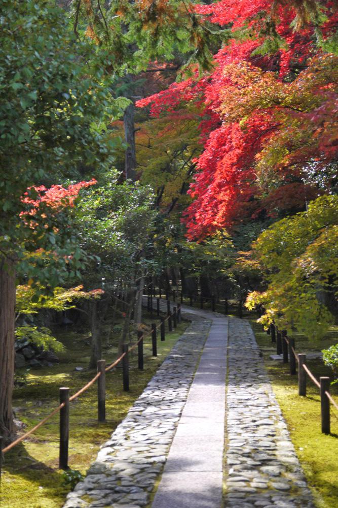 鹿王院の紅葉